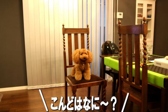 2_20080924171436.jpg