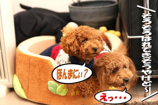 2_20081027010819.jpg