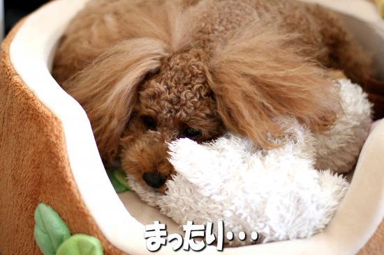 2_20081124203441.jpg