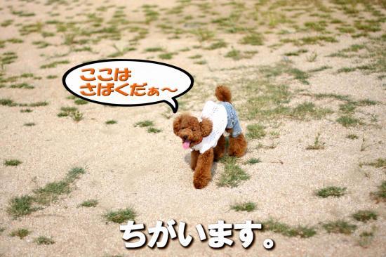 3_20080914235500.jpg