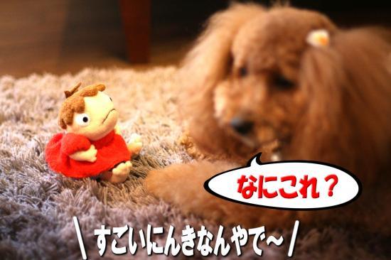 3_20080925203023.jpg