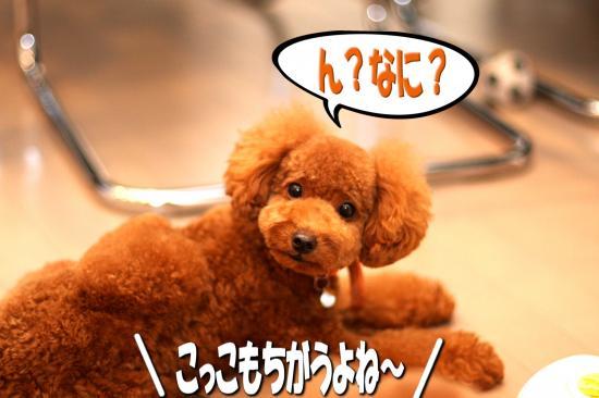 3_20081102121454.jpg
