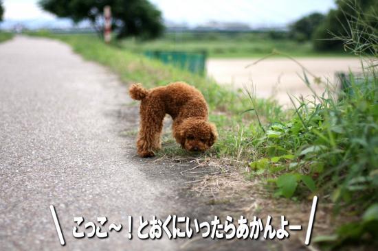 4_20080831143516.jpg