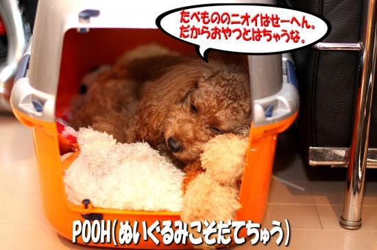 4_20081111163724.jpg