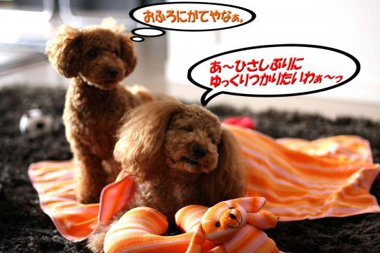 4_20081120154644.jpg