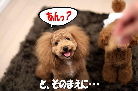 4_20081130145041.jpg