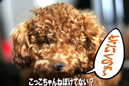 5_20080829165520.jpg
