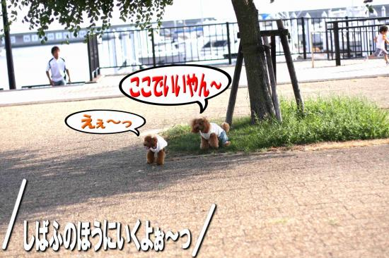 5_20080916152441.jpg