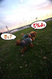 5_20081125234458.jpg