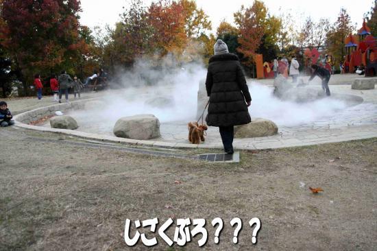 5_20081204233938.jpg