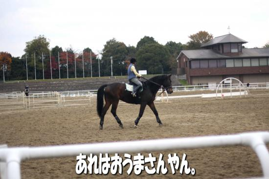 5_20081205223525.jpg