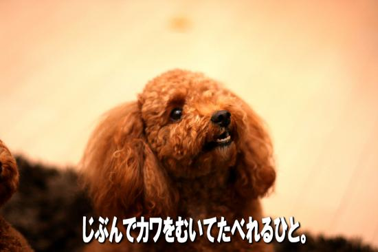 6_20081022161952.jpg