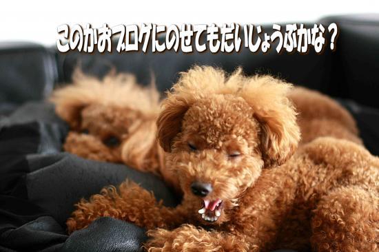 6_20081115161109.jpg
