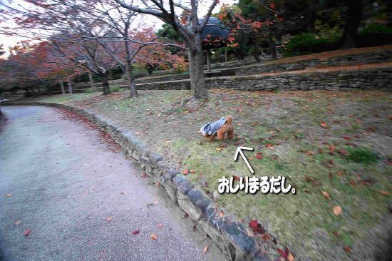 6_20081127212111.jpg