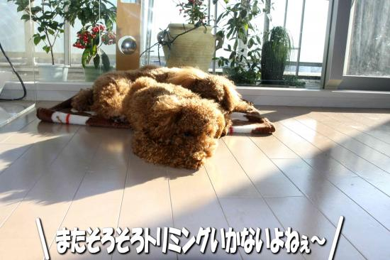 6_20081217004106.jpg