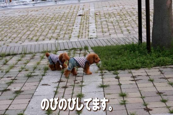 7_20080907043312.jpg