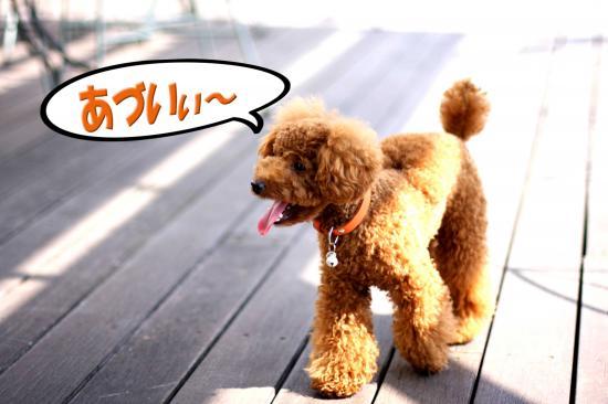 7_20080913193203.jpg