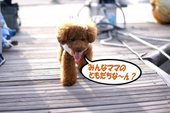 7_20080917165201.jpg