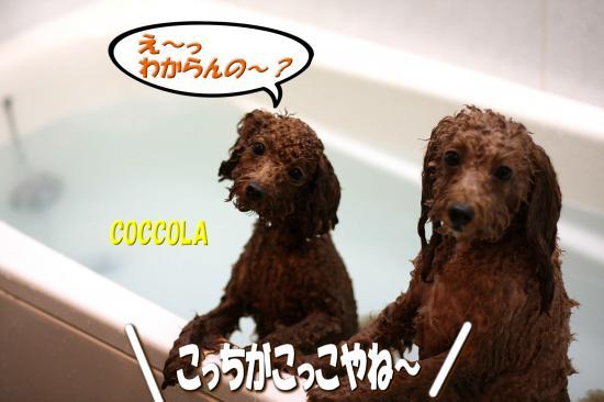 7_20081120154733.jpg