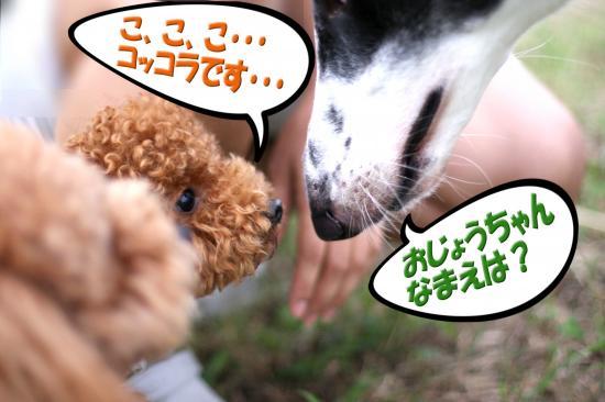 8_20080901162459.jpg