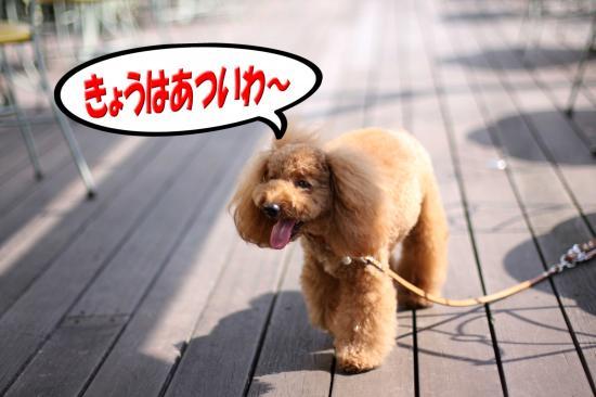 8_20080913193213.jpg