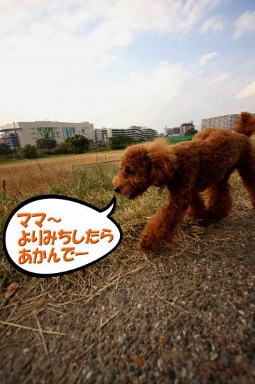 8_20081117160209.jpg