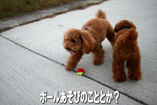 9_20081021182512.jpg