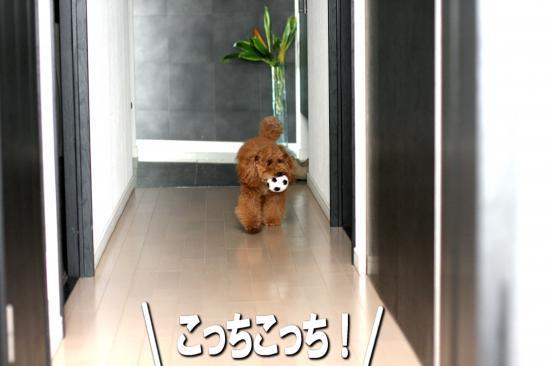 9_20081024153121.jpg