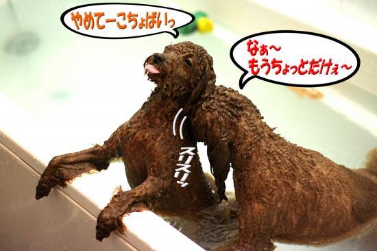9_20081122144514.jpg