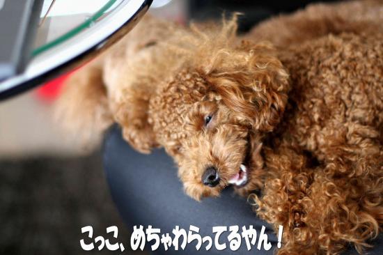 9_20081203014134.jpg