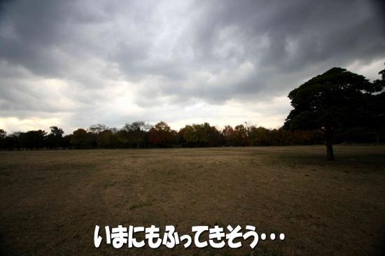 9_20081206153037.jpg