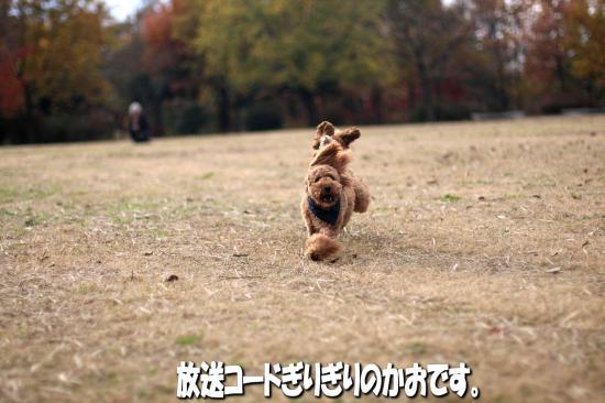 9_20081207232130.jpg