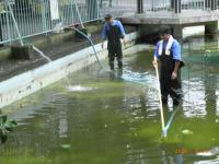 川崎大師平間寺鶴の池清掃2