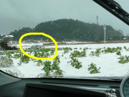 1月11日積雪(39)