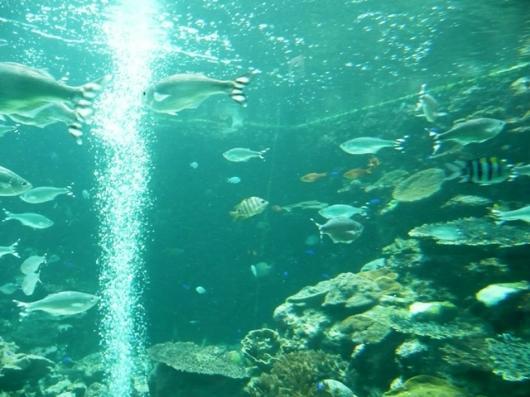 串本海中水槽