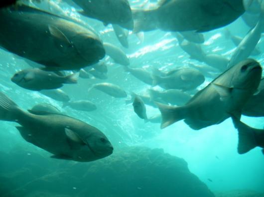 自然水族館
