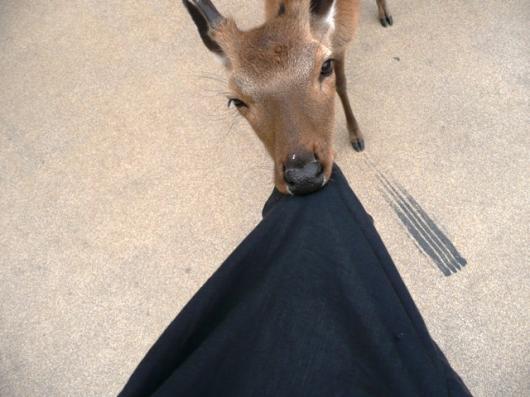 服を喰う鹿