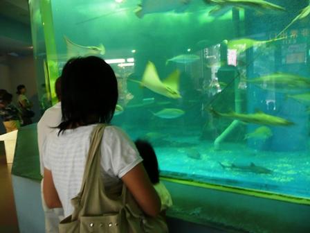 宮島水族館 入り口大水槽