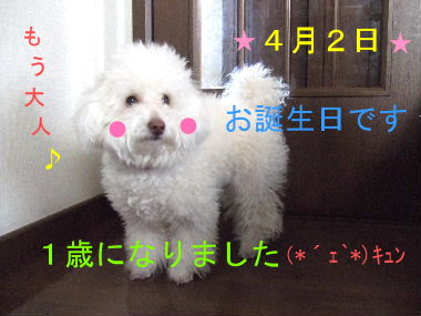 2008_0402想い出00syori