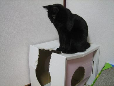 潰れかけのハウス