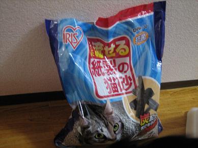 NEW猫砂