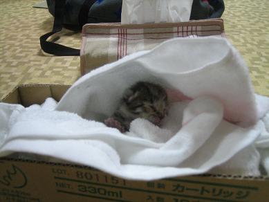 保護チビ猫