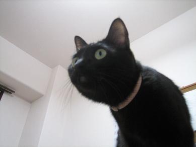 机上の黒猫