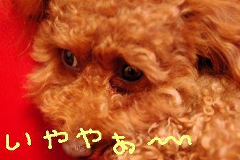 20081119-02kai.jpg