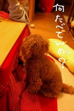20081128-03kai.jpg