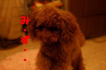 20090129-02kai.jpg