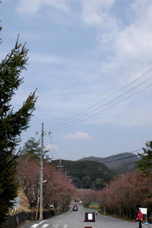 20090405-03.jpg