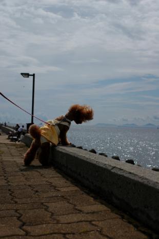 20090621-03.jpg