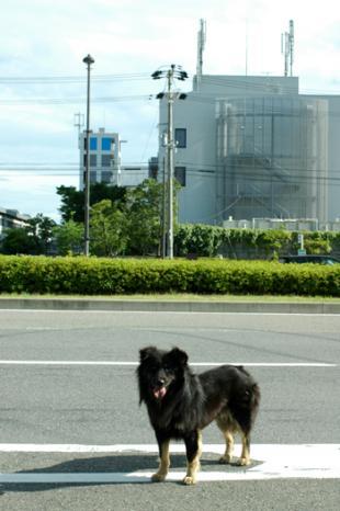 20090621-11.jpg