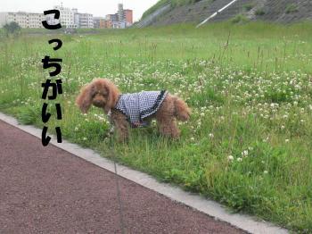 P1210383kai.jpg